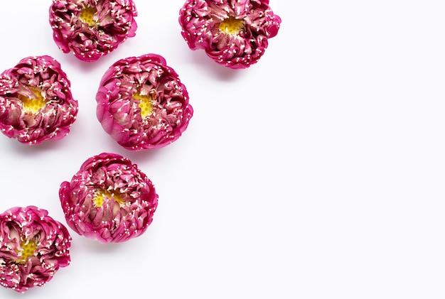 Rosa lotusblume auf weißem hintergrund. speicherplatz kopieren Premium Fotos