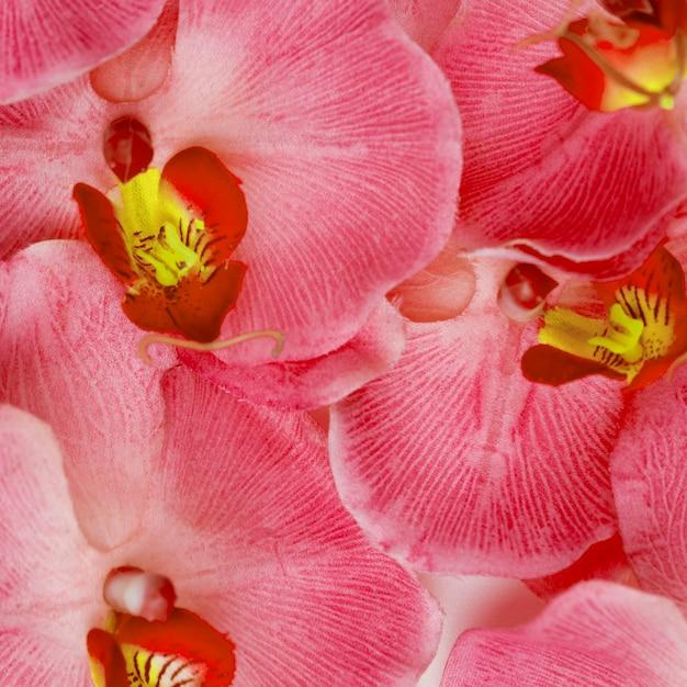 Rosa orchidee blüht hintergrund Kostenlose Fotos