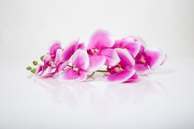 Rosa orchidee isoliert auf weißem hintergrund. Premium Fotos