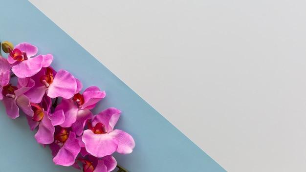 Rosa orchideenblumen vereinbarten auf ecke des doppelhintergrundes Kostenlose Fotos