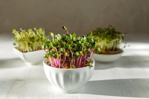 Rosa rettichsprösslinge auf weißem hölzernem hintergrund im modischen harten licht Premium Fotos