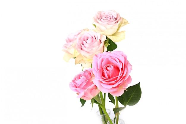 Rosa rosen lokalisiert auf selektiver weichzeichnung des weißen hintergrundes Premium Fotos