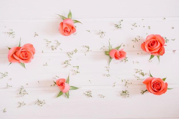 Rosa Rosen und kleine weiße Blumen auf weißem Hintergrund | Download ...