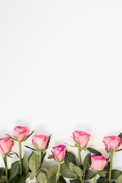 Rosa rosenanordnung auf weißem kopienraumhintergrund Premium Fotos