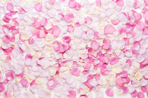 Rosa rosenblütenblätter auf weißem hintergrund. flache lage, draufsicht, kopierraum. Premium Fotos