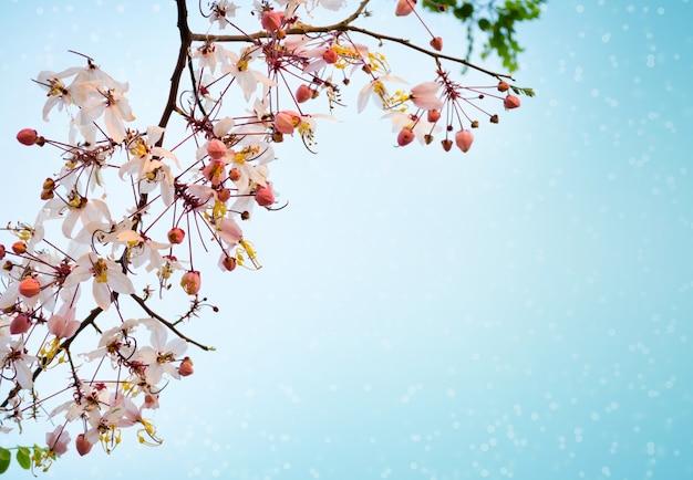 Rosa sakura-blumen Premium Fotos