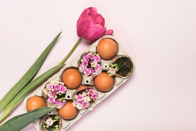 Rosa tulpe mit eiern in der zahnstange Kostenlose Fotos