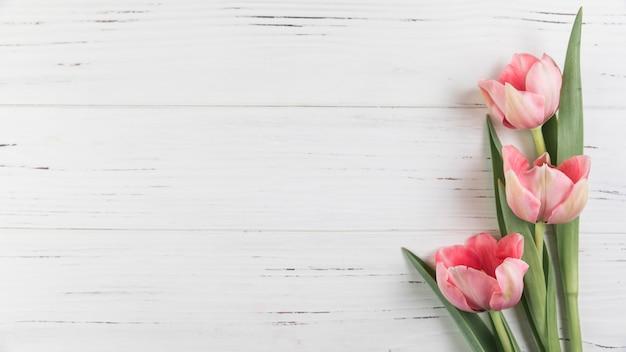 Rosa tulpen auf weißem hölzernem strukturiertem hintergrund Kostenlose Fotos