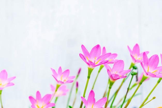 Rosafarbene blumen auf einem weißen hintergrund Premium Fotos