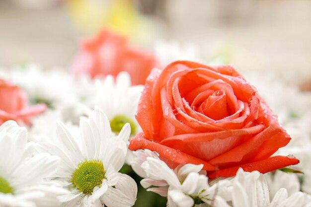Rosafarbene Rosen der Nahaufnahme und kleine weiße Blumen auf ...