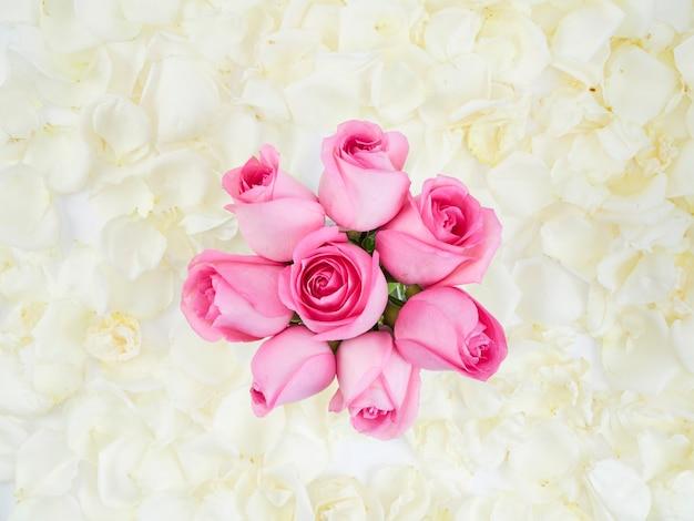 Rosafarbene rosen getrennt auf weißem hintergrund Premium Fotos