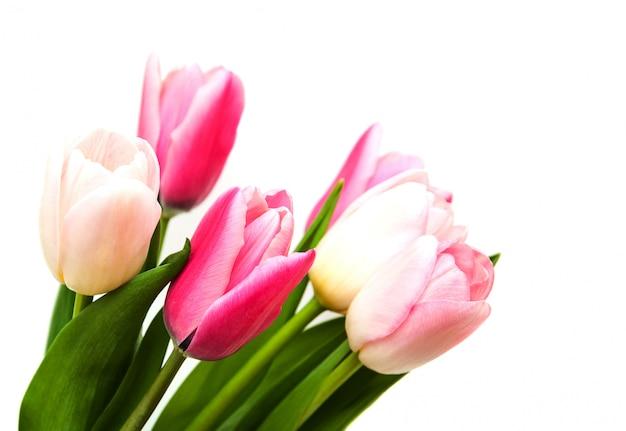 Rosafarbene tulpeblumen Premium Fotos