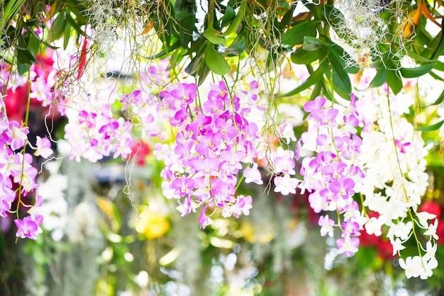 Rosafarbene und purpurrote blume der tropischen betriebsschönen orchidee Premium Fotos
