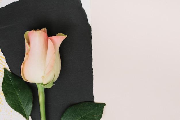 Rosarosenblume mit schwarzem papier auf weißer tabelle Kostenlose Fotos