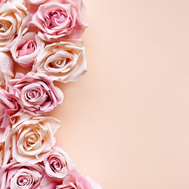 Rosarosenblumen auf rosa hintergrund Kostenlose Fotos