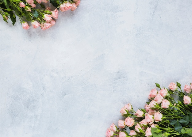 Rosen bündeln an der ecke des konkreten hintergrundes Kostenlose Fotos