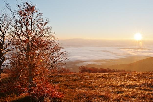 Rote bunte herbstbäume mit sonnenlicht Premium Fotos