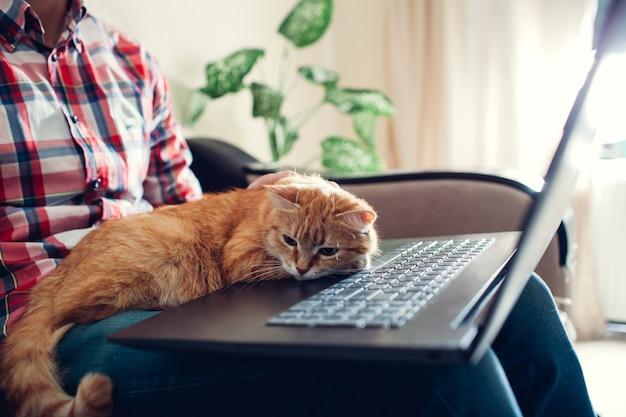 Rote katze sitzt auf den händen eines freiberuflers nahe dem laptop Premium Fotos