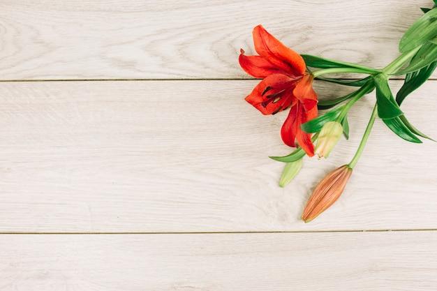Rote lilienblume mit der knospe auf hölzernem schreibtisch Kostenlose Fotos