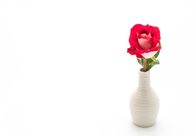 Rote rose auf weißem hintergrund Premium Fotos
