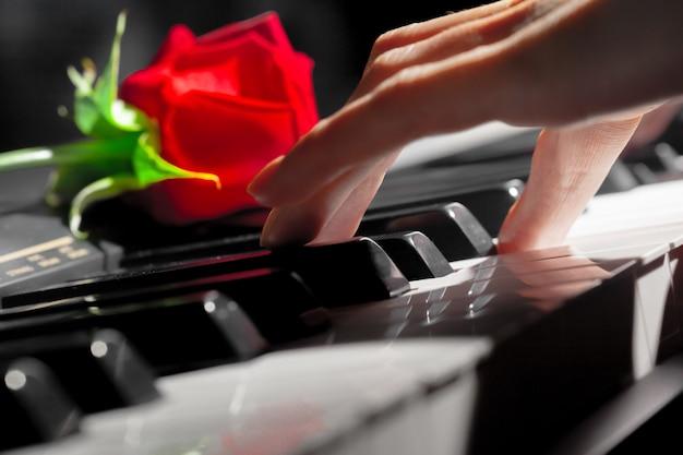 Rote rosen auf klaviertasten Premium Fotos