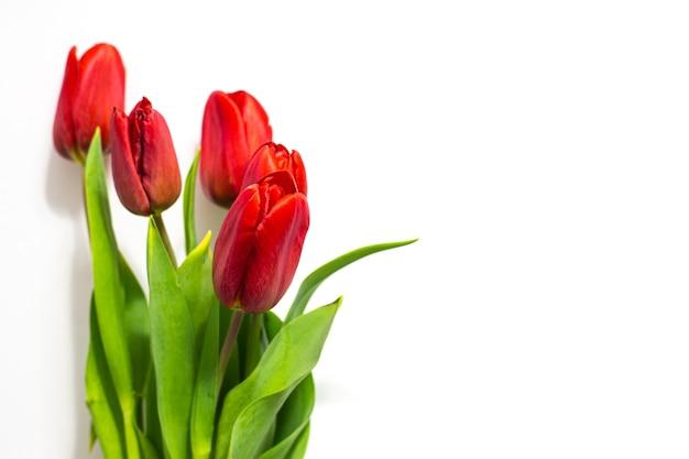 Rote tulpen auf weißem hintergrund. festlicher frühlingsstrauß für glückwünsche zum valentinstag, happy women's day .. Premium Fotos