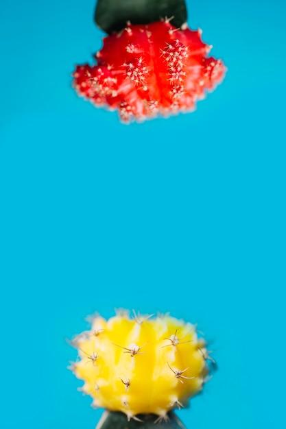 Rote und gelbe Kakteen | Download der kostenlosen Fotos