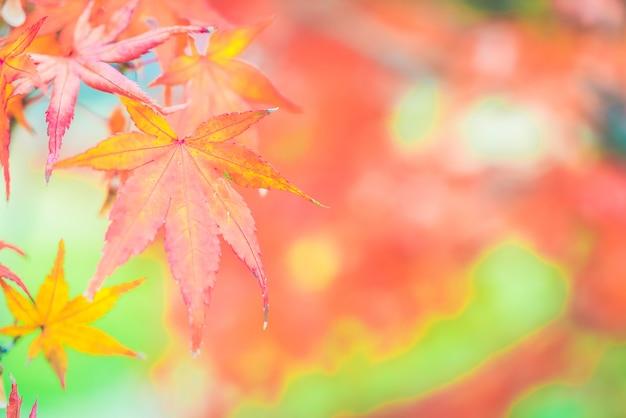 Rotes ahornblatt Kostenlose Fotos