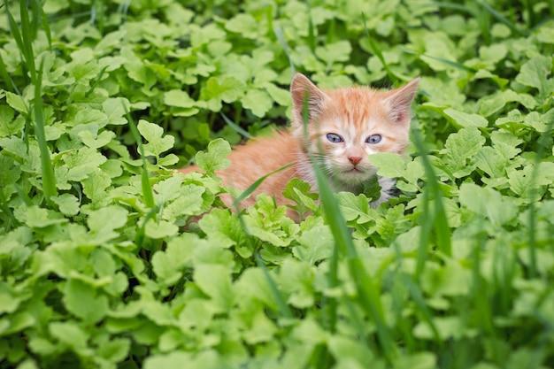 Rotes kätzchen im grünen gras, haustiere Premium Fotos