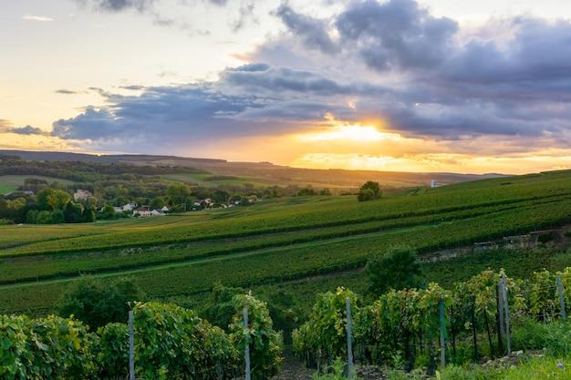 Rudern sie rebtraube in den champagnerweinbergen am landschafts-dorfhintergrund montagne de reims, reims, frankreich Premium Fotos
