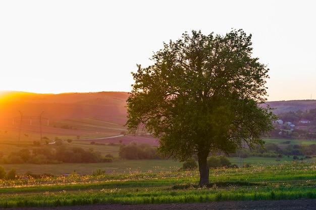 Ruhige und friedliche ansicht des schönen großen grünen baumes bei sonnenuntergang, der allein im frühlingsfeld auf entferntem kleinen dorf zwischen grünen gärten und hügelhintergrund wächst. schönheit und harmonie des naturkonzepts. Premium Fotos
