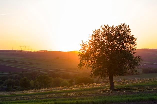 Ruhige und friedliche ansicht des schönen großen grünen baumes bei sonnenuntergang, der allein im frühlingsfeld auf entfernten hügeln wächst, die im orange abendsonnenlicht gebadet werden Premium Fotos