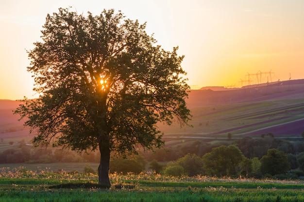 Ruhige und friedliche ansicht des schönen großen grünen baumes bei sonnenuntergang, der allein im frühlingsfeld auf entfernten hügeln wächst, die im orange abendsonnenlicht und in den hochspannungslinien gebadet werden, die sich zum horizonthintergrund erstrecken. Premium Fotos