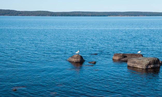Ruhiger blauer see mit steinen und vögeln Premium Fotos