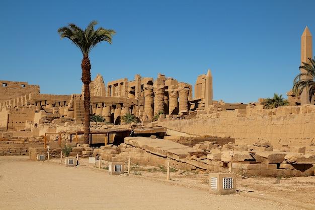 Ruinen von pharaonen und palmen in luxor. Premium Fotos