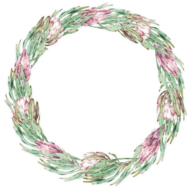 Runder rosa protea- und grünblattrahmen. aquarell exotische blumenillustration. Premium Fotos