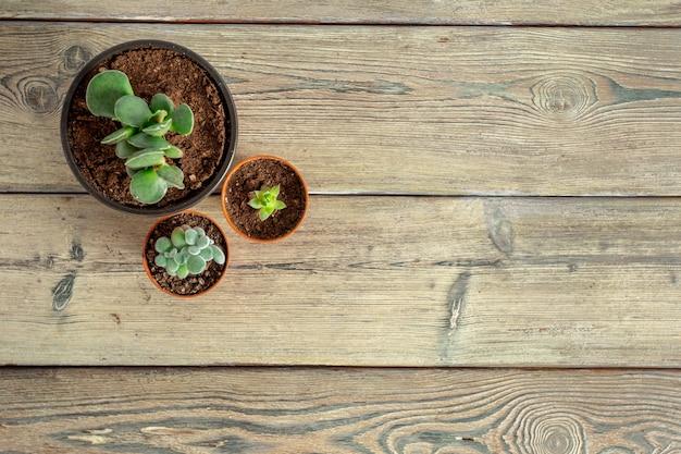 Saftige pflanzen auf dem tisch gruppiert Premium Fotos