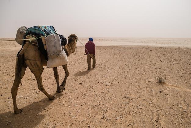 Sahara desert guide und kamel Premium Fotos