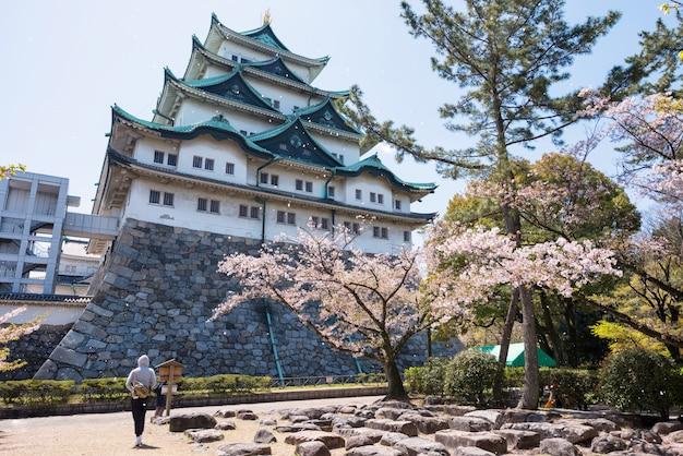 Sakura-blume, die am nagoya-schloss schwimmt Premium Fotos