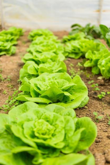 Salate Kostenlose Fotos