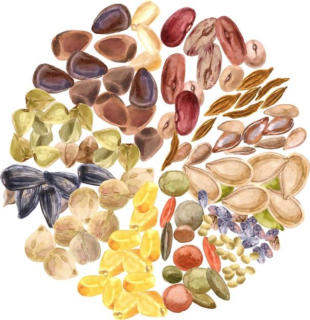 Samen isoliert. glutenfreies produkt, gesunde ernährung, pflanzliches eiweiß, vegetarische ernährung. mais. linsen, zeder, chia, amaranth Premium Fotos