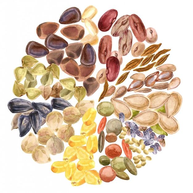 Samen isoliert. glutenfreies produkt, gesunde ernährung, pflanzliches eiweiß, vegetarische ernährung Premium Fotos
