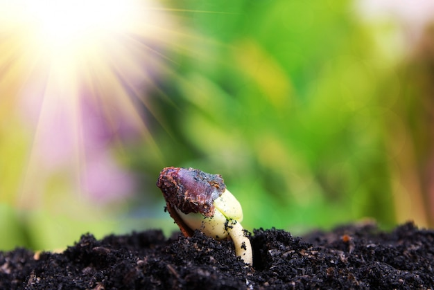 Samen zum baum, saat, wachsendes konzept des pflanzensamen Premium Fotos