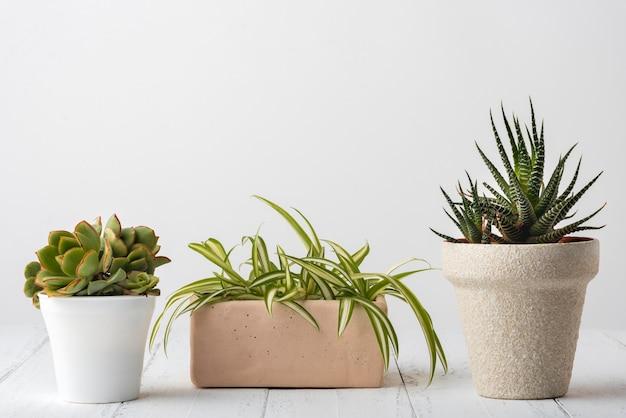 Sammlung lebendiger pflanzen mit kopierraum Premium Fotos
