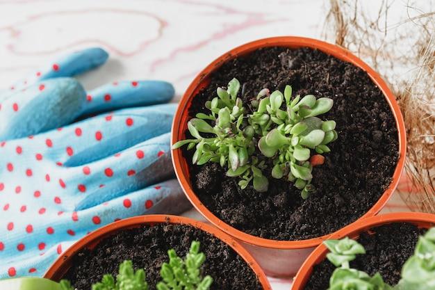 Sammlung verschiedene zimmerpflanzen, gartenhandschuhe, blumenerde und kelle auf weißem hölzernem hintergrund. blumenerde zimmerpflanzen hintergrund. Premium Fotos