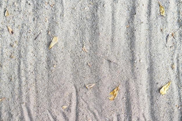 Sandhintergrundbeschaffenheit mit trockenen fallblättern Premium Fotos