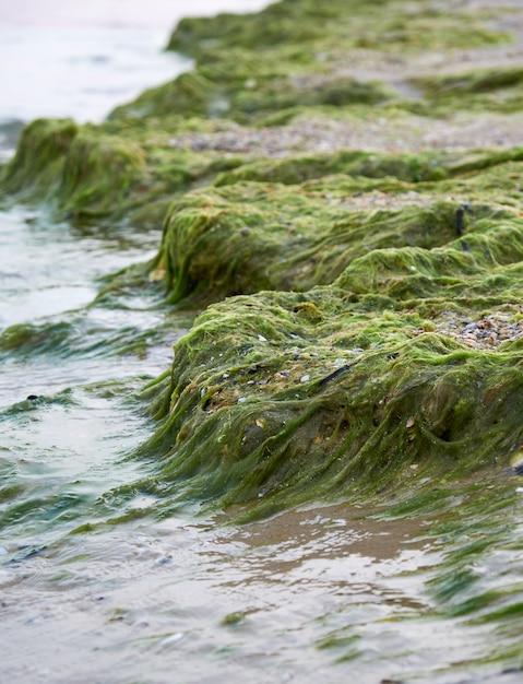Sandstrand mit grünalgen nach einem sturm, Premium Fotos
