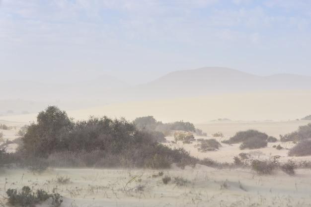 Sandsturm in den dünen Premium Fotos