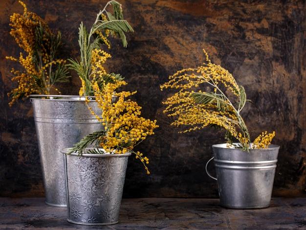 Sanfte mimose in eimern Premium Fotos