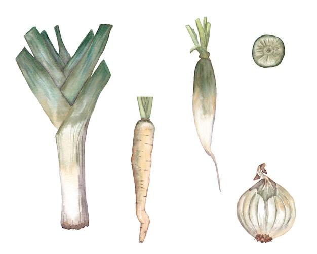 Satz der weißen karotte, des porrees, der zwiebel, des daikonrettichs mit scheibe. aquarell abbildung. Premium Fotos